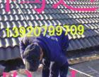 天津鸿运防水补漏公司,专业做屋面防水 价格合理 随叫随到