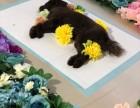 深圳猫死了如何处理