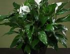 花卉租赁 办公区花卉租摆公司 绿植养护公司