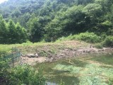 杭州天目山景区口2000亩有林地承包转让