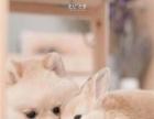 小宠寄养。猫狗兔