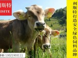 犊牛断奶后吃什么饲料好?犊牛断奶专用营养预混料