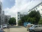 沙井国道边庄村新出800平方楼上带装修厂房招租,