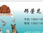 365宠物托运公司