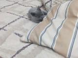 哪儿可以买到这样的蓝猫宝宝