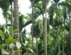 南岛农场种植土地转租