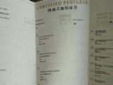中国登陆冠军泰迪后代血统证书可查询