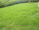 重慶草坪批發花園屋頂草坪工地圍擋人造草坪花糟填土腐殖土批發