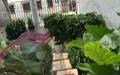各种绿植批发零售