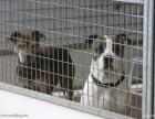 青岛宠物托运国内直达青岛宠物托运价格青岛宠物托运代理