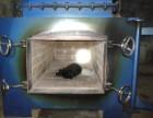 浦东南汇小动物殡葬服务地址临港新城宠物火化电话宠物善后事处理
