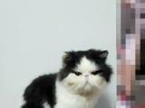 加菲猫找女盆友,借配