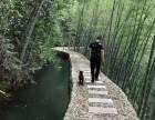 烧烤钓鱼 游泳划船 爬山摄影 杭州农家乐