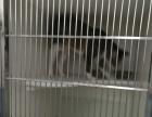 佛山乐峰宠物医院,24小时急诊,正规宠物医院