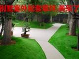 孟鑫草坪 公园假草皮 绿草坪