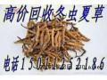 回收东阿阿胶回收福胶回收冬虫夏草高价回收黄玉参鱼肚