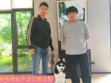 嘉兴宠物犬行为纠正训练培训学校训犬训狗基地