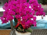 苏州绿植租赁植物绿化租摆办公室租摆自营花卉绿植养殖基地配送