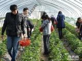 上海农家乐一日游推荐 自助烧烤野外垂钓 采摘草莓西瓜蔬菜