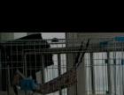 转让9成新高级猫笼子+猫砂盆