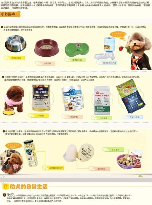 500起出售高品质 茶杯 玩具 小体泰迪宝宝 健康纯种