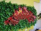 天津绿墙 天津植物墙 天津室内绿墙 天津立体绿化