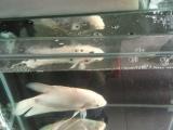 鱼缸带招财鱼一起卖