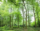 千万林地三百万出售!57年到期伊春嘉荫2500亩林场可分开