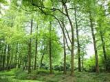 千万林地三百万出售 57年到期伊春嘉荫2500亩林场可分开