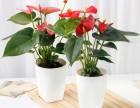 成都绿植花卉租售,私家花园,园林绿化,植物墙 植物景观造型