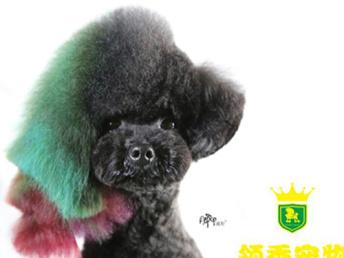 安徽宿州市宠物美容师培训班 领秀 因材施教