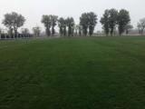 優質冷季型高羊茅早熟禾混播草坪房山涿州固安大興門頭溝運輸供應