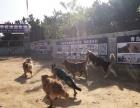 青岛狗狗寄养活动中心