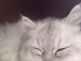 加菲猫3000元