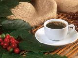 日照五莲咖啡师培训