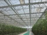 青岛温室阳光板厂家直销,8mm双层保温阳光板