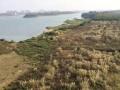 佛山市三水50亩江景地块低价转让可做休闲农庄水上娱乐项目