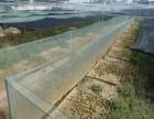 青蛙养殖前景和青蛙养殖技术