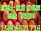 山东苹果批发价格,,,,,18d