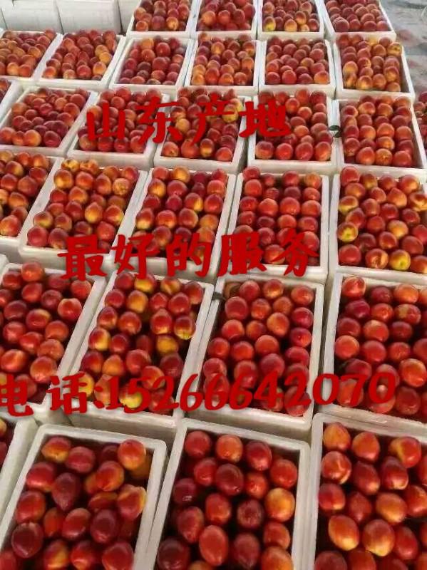 油桃市场批发油桃价格