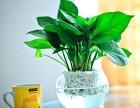 租花,绿植租赁,花卉租摆,绿植公司-南昌芙蓉花卉园艺公司