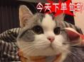 火爆出售美短美国短毛猫精品花纹纯种健康当天包邮