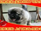 高加索犬幼犬,纯俄系 高大威猛纯种健康 高加索