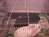 宠物兔带笼带药同城自提