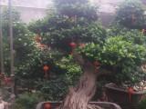 懷柔綠植花卉租賃租擺銷售