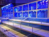 專業定做超市,酒店魚缸,循環制冷,免費設計