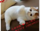 24小时热线17196612828丨全场特价品种齐全丨加菲猫