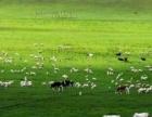 来内蒙古大草原骑马吃牛羊肉住蒙古包