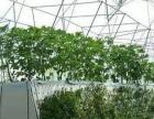 海南省三亚市河东区(虚拟街道办)35亩设施农用地出