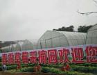 春露草莓采摘园